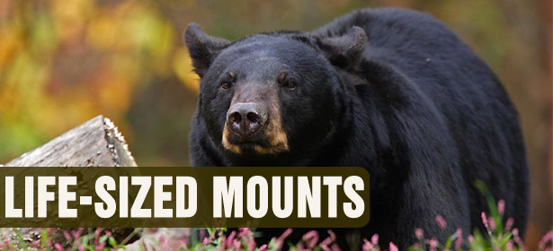 Life-Sized Mounts